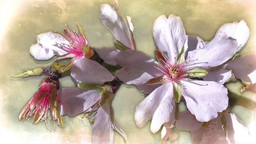 flores-del-almendro-1024x576 Marzo, familia, escuela, chocolate con churros...