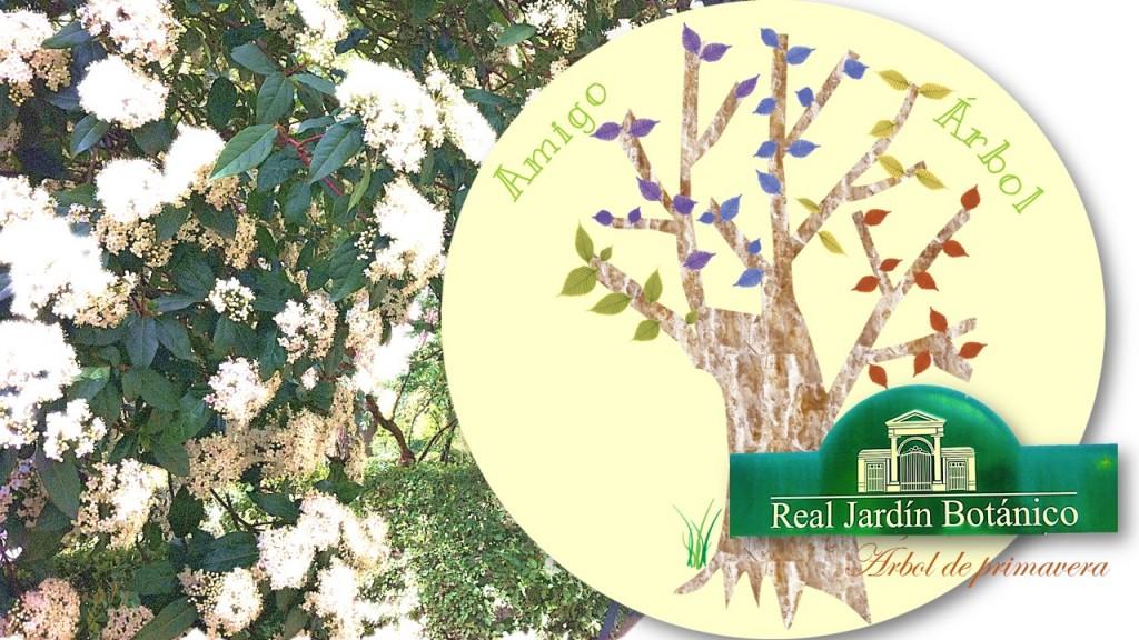Diapositiva1-2013_11_05-18_13_53-UTC-1024x576 Amigo Árbol de primavera, Jardín Botánico #escuelaenREDada